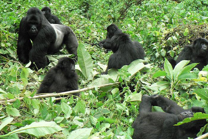 Rwanda Gorilla Trekking Rules and Regulations